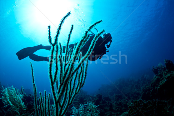 Scuba diver on a tropical reef Stock photo © MojoJojoFoto