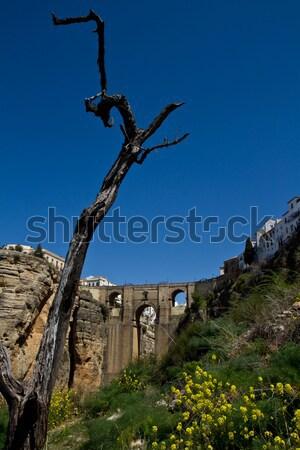 Nouvelle pont Espagne derrière vieux arbre Photo stock © MojoJojoFoto