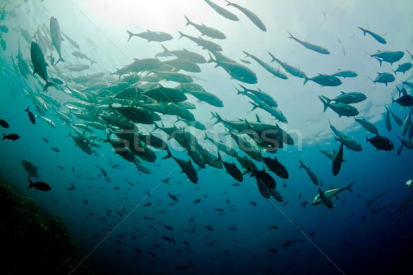 école cercle Costa Rica Voyage subaquatique Photo stock © MojoJojoFoto