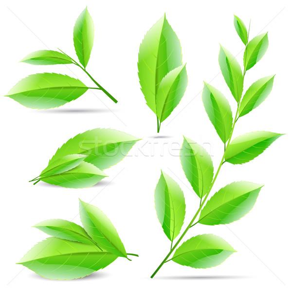 Ingesteld collage groene thee bladeren boom natuur Stockfoto © mOleks