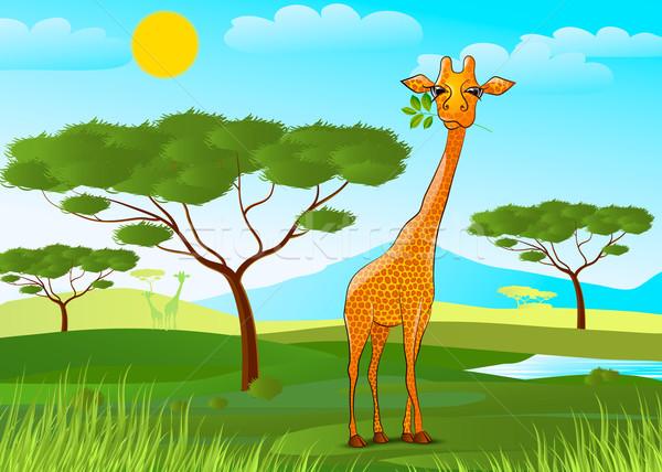 Giraffe eten bladeren afrika zonsondergang hemel Stockfoto © mOleks