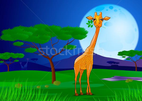 жираф еды листьев Африка закат небе Сток-фото © mOleks
