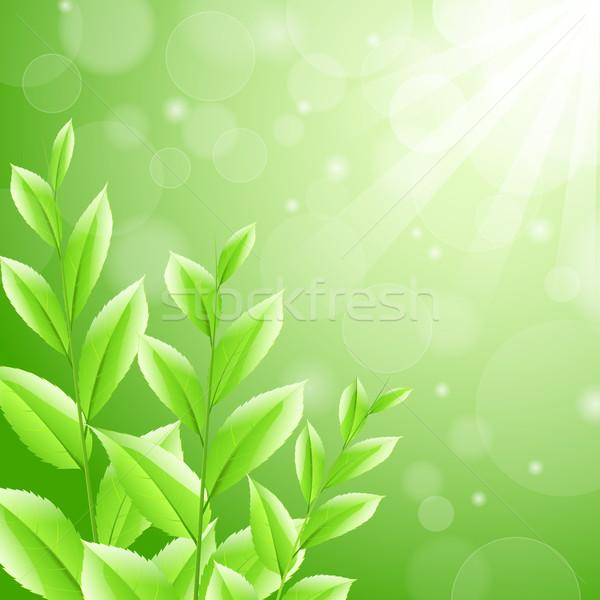 Groene thee bladeren boom natuur groene zwarte Stockfoto © mOleks