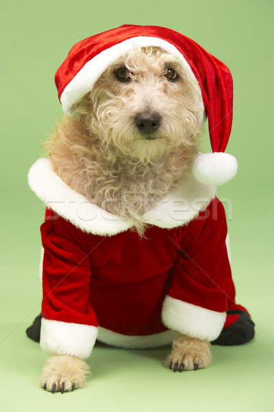 Small Dog In Santa Costume Stock photo © monkey_business