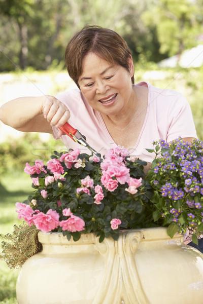 Stock fotó: Idős · nő · kertészkedés · kert · kínai · személy