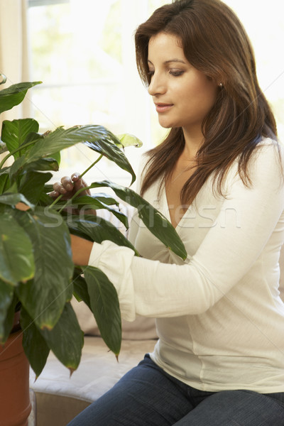 Stock fotó: Nő · otthon · néz · nappali · fiatal · növény