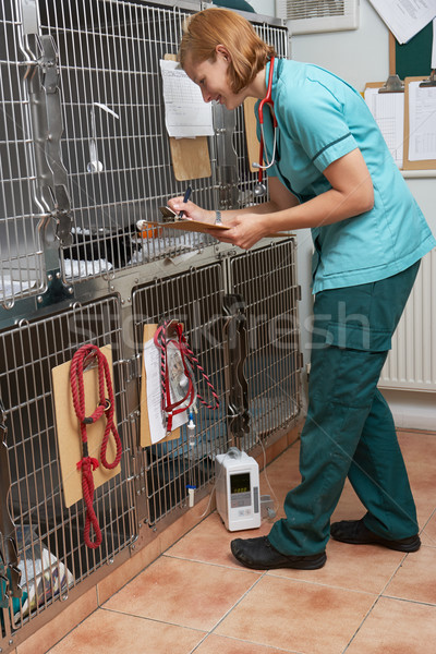Veterinaria infermiera animali donna medico donne Foto d'archivio © monkey_business