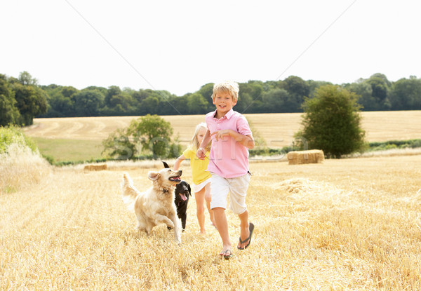 Boy With Dogs Running Through Summer Harvested Field Stock photo © monkey_business