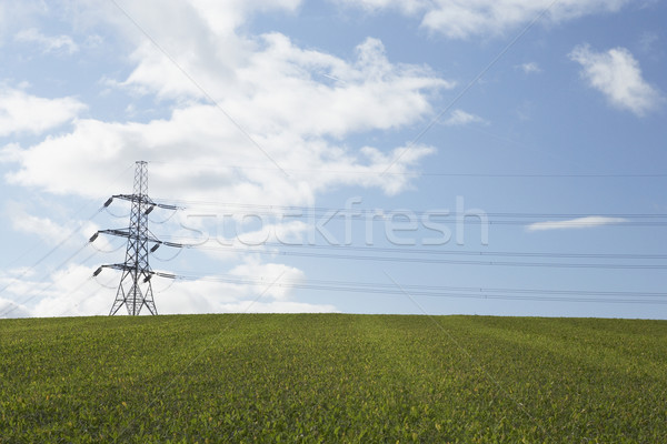 Electricity Pylons In A Paddock Stock photo © monkey_business