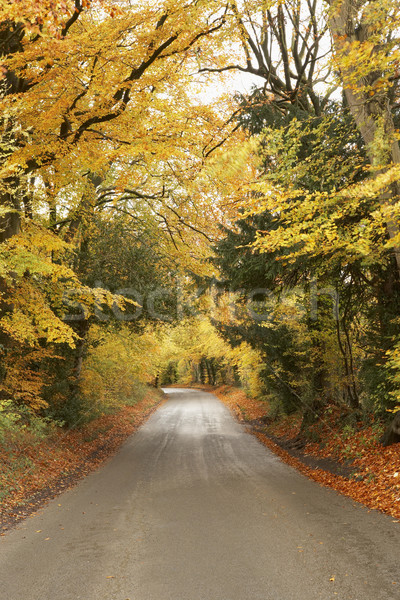 Country Road In Autumn Stock photo © monkey_business