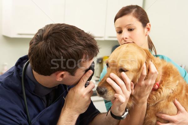 Male Veterinary Surgeon Examining Dog In Surgery Stock photo © monkey_business