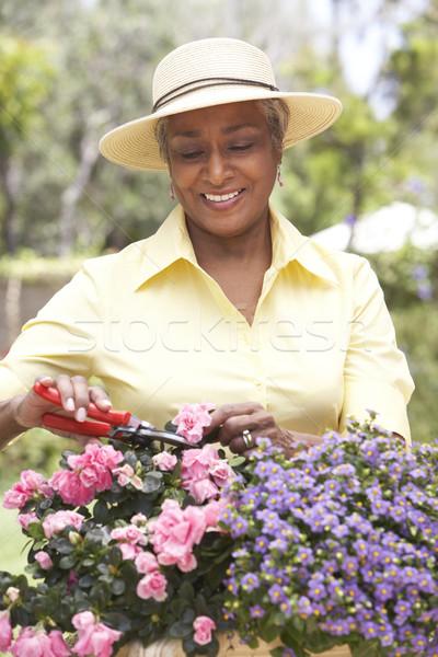 Photo stock: Supérieurs · femme · jardinage · jardin · Homme · personne