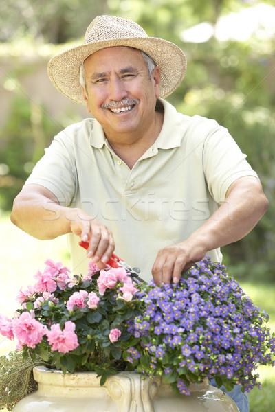 Senior Man Gardening Stock photo © monkey_business
