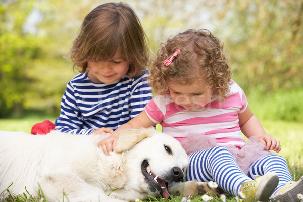 Two Children Petting Family Dog In Summer Field Stock photo © monkey_business