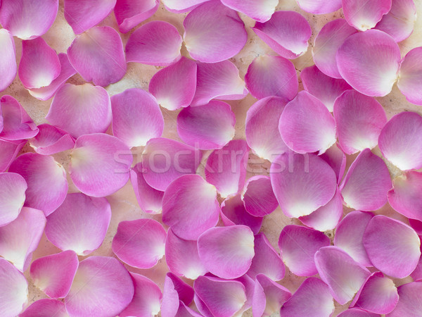 Large Group Of Pink Rose Petals Stock photo © monkey_business
