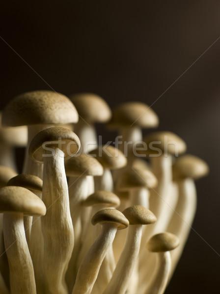Buna Shimoji, Brown Beech, Mushrooms Stock photo © monkey_business