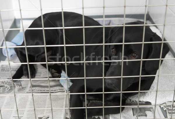 Dog Recovering In Vet's Kennels Stock photo © monkey_business