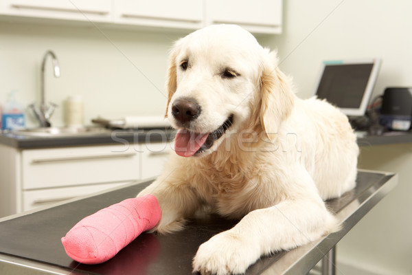 Dog Recovering After Treatment On Table In Veterinary Surgery Stock photo © monkey_business