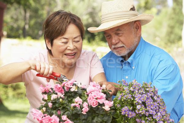 Senior Couple Gardening Together Stock photo © monkey_business
