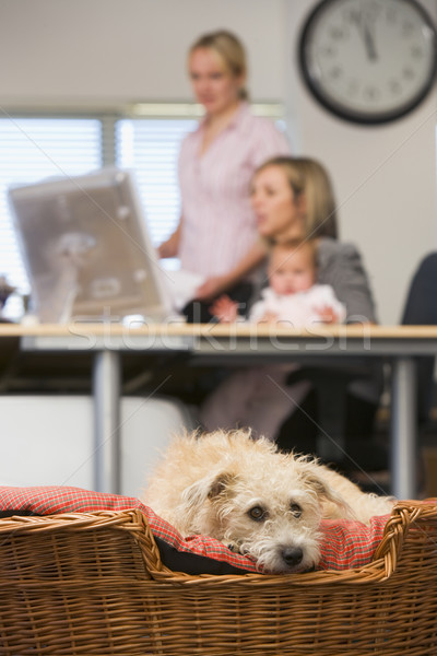 Dog lying in home office with two women and a baby in background Stock photo © monkey_business