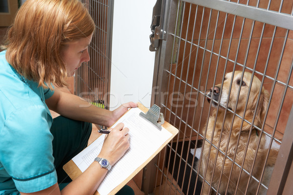 Veterinary Nurse Checking On Dog In Cage Stock photo © monkey_business