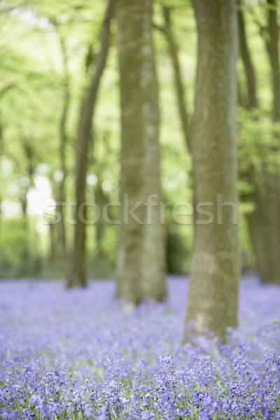 Foto d'archivio: Crescita · albero · foresta · natura · colore · Inghilterra