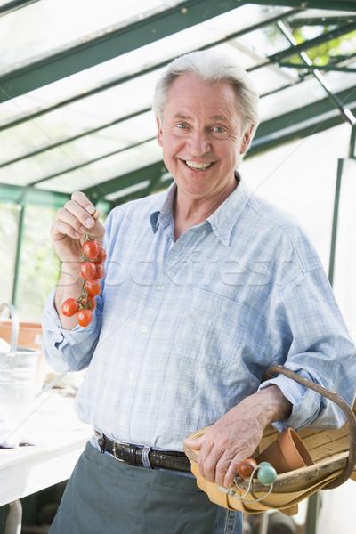 Photo stock: Homme · effet · de · serre · tomates · cerises · souriant · jardin