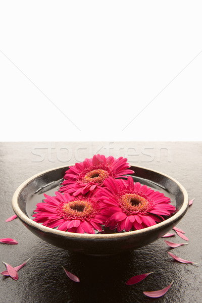 Stock photo: Flower heads in bowl of water