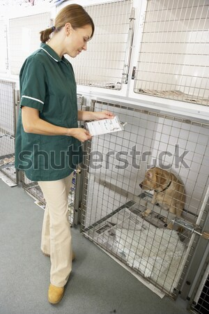 Vetinary Nurse Checking Sick Animals In Pens Stock photo © monkey_business