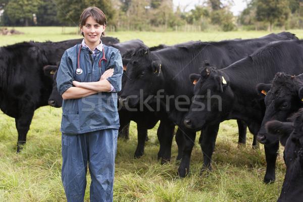 портрет ветеринар области скота фермы работу Сток-фото © monkey_business