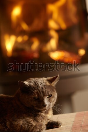 Close Up Of Cat Relaxing By Cosy Log Fire Stock photo © monkey_business