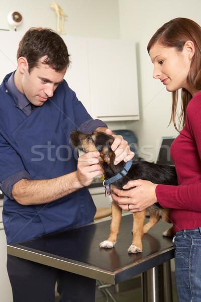 Foto stock: Masculina · veterinario · cirujano · examinar · perro · cirugía