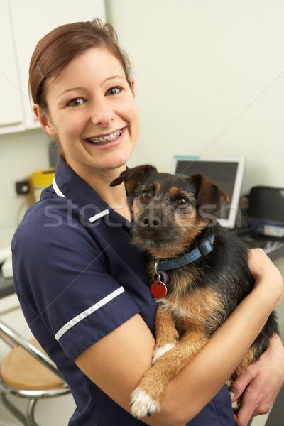 Female Veterinary Surgeon Holding Dog In Surgery Stock photo © monkey_business