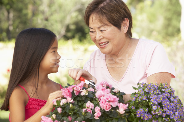 Granddaughter And Grandmother Gardening Together Stock photo © monkey_business