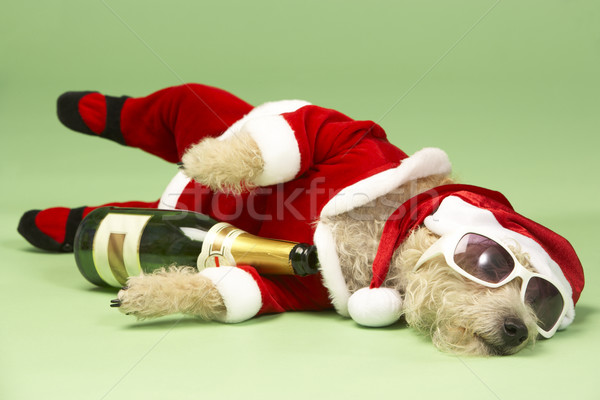 Small Dog In Santa Costume Lying Down With Champagne and Shades Stock photo © monkey_business