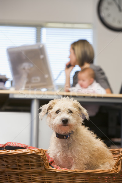 Dog sitting in home office with woman holding baby in background Stock photo © monkey_business