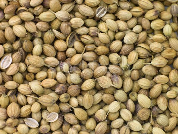 Kişniş tohumları grup renk stüdyo taze Stok fotoğraf © monkey_business