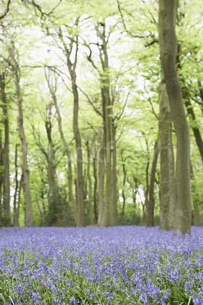Crescita albero foresta natura colore Inghilterra Foto d'archivio © monkey_business