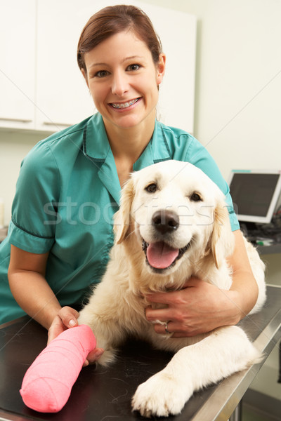 Female Veterinary Surgeon Treating Dog In Surgery Stock photo © monkey_business