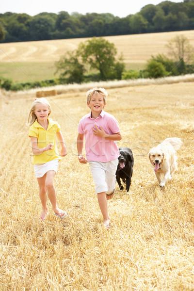 Crianças cães corrida verão campo criança Foto stock © monkey_business