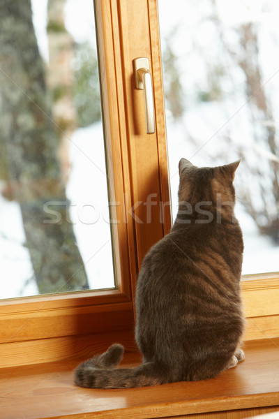 Cat Sitting On Window Ledge Looking At Snowy View Stock photo © monkey_business