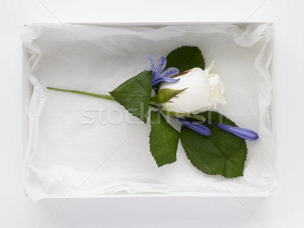 White Rose Corsage Stock photo © monkey_business