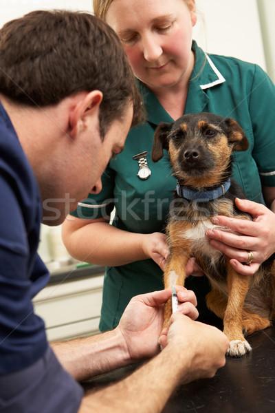 Foto stock: Masculina · veterinario · cirujano · enfermera · examinar · perro
