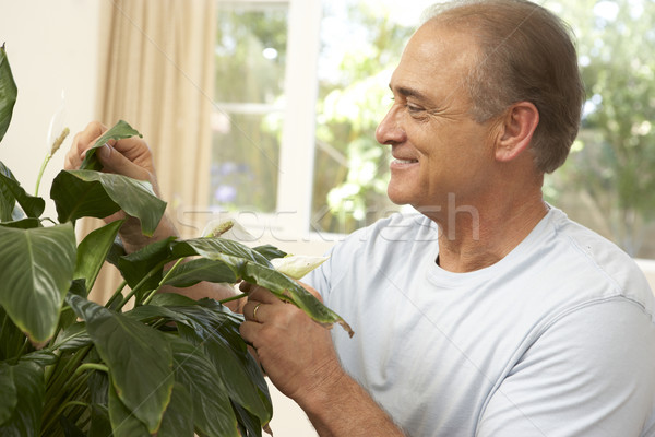 Stock photo: Senior Man At Home Looking After Houseplant