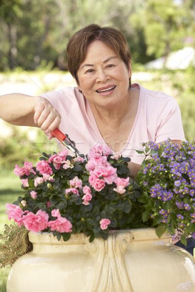 Stock fotó: Idős · nő · kertészkedés · kert · ázsiai · kínai