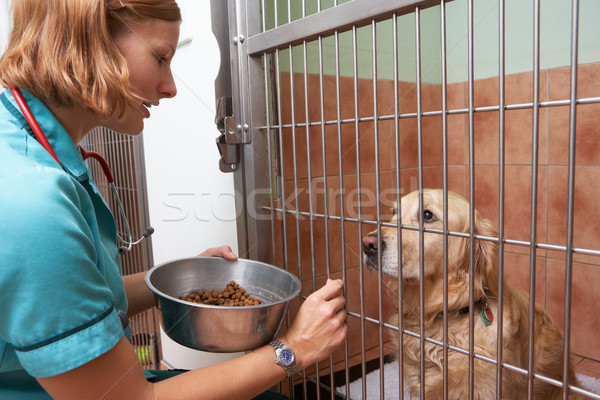 Veterinary Nurse Feeding Dog In Cage Stock photo © monkey_business