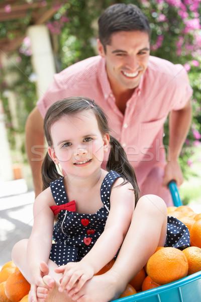 Pai empurrando filha carrinho de mão laranjas menina Foto stock © monkey_business
