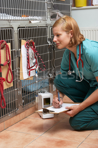 Veterinary Nurse Checking On Animals In Cages Stock photo © monkey_business