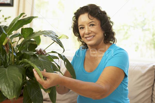 Idős nő otthon néz nappali növény Stock fotó © monkey_business