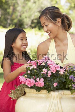 Stok fotoğraf: Torun · büyükanne · çiçekler · gülen · sevmek